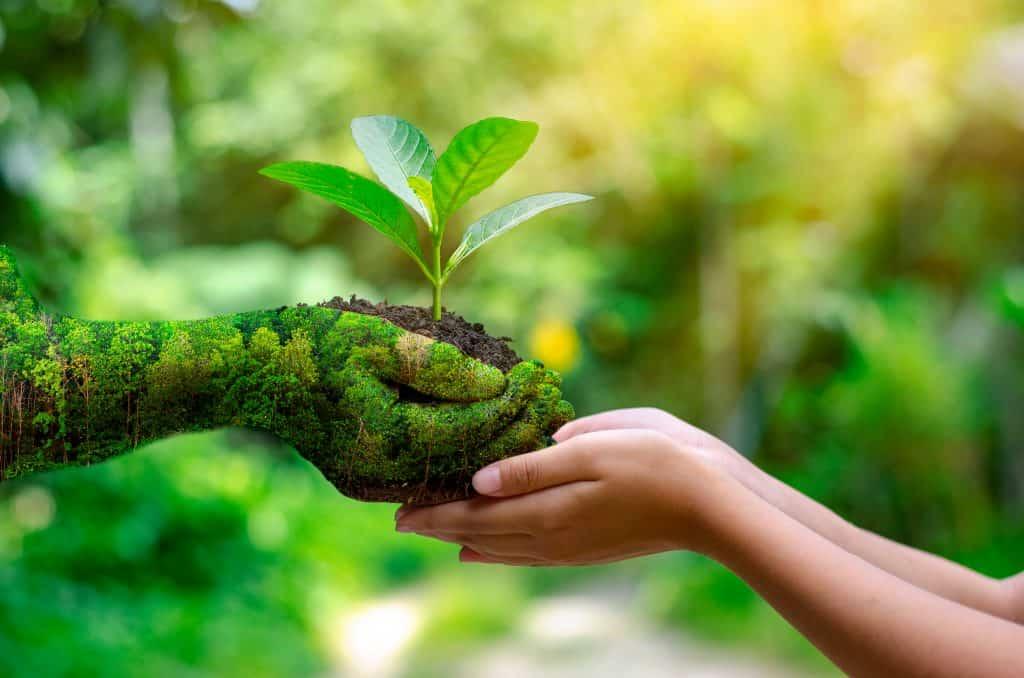Catégorie Soin à la Nature et à la Terre blog de Tomate & Basilic