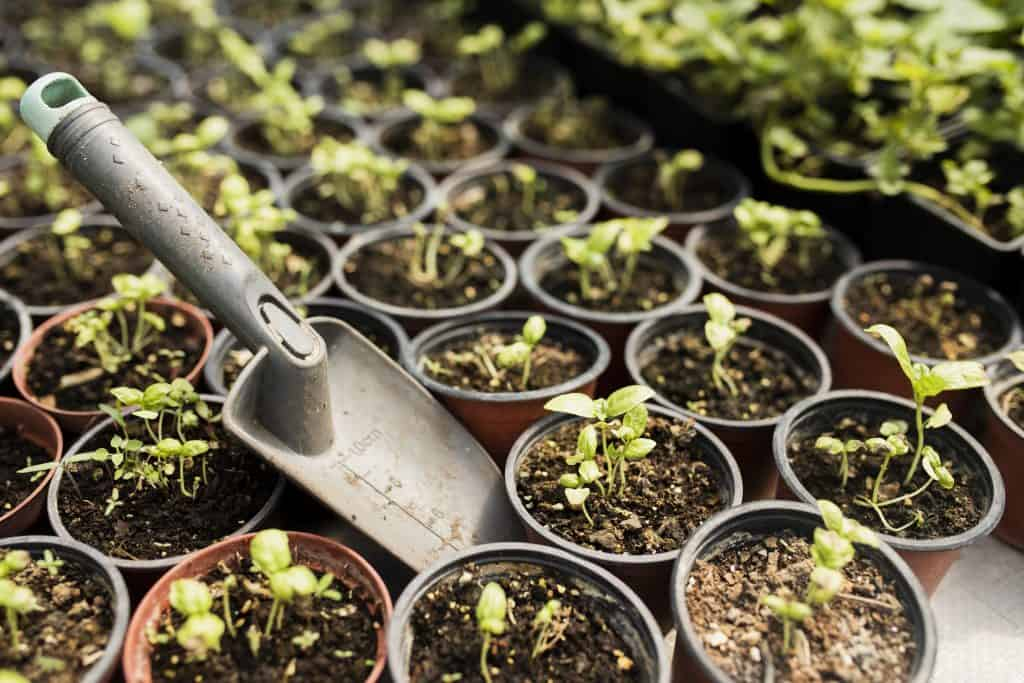 Catégorie Potager et Jardin du blog de Tomate & Basilic