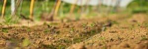 enrichir le sol en permaculture
