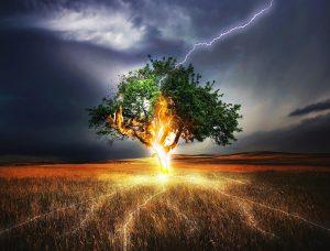 éclair sur un arbre